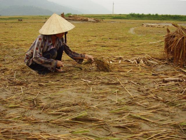 Vietnam: climate change report